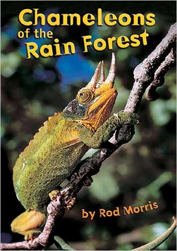 Chameleons of the Rain Forest