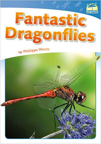 Fantastic Dragonflies